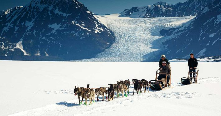 Dog Sled Tour