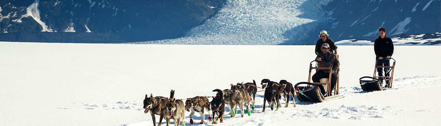 Glacier Dog Sledding from Knik River Lodge
